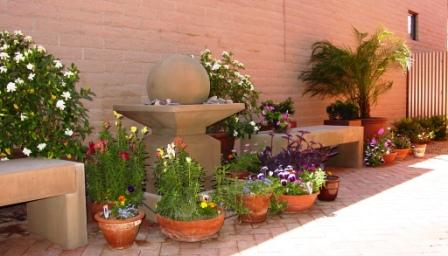 potted plants and fountain